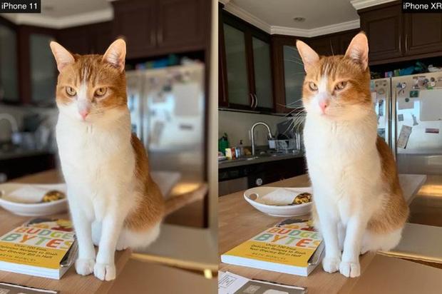 So sánh iPhone 11 với ma thuật Deep Fusion và iPhone XR, mèo nào cắn mỉu nào? - Ảnh 15.