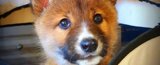Xét nghiệm ADN cho một con chó hoang mới tìm thấy, nhận về cú twist cực mạnh: Hóa ra là loài thú hiếm có hàng đầu hành tinh - Ảnh 1.