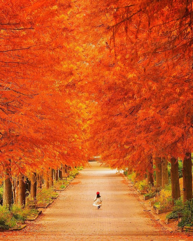 Tìm đâu ra nước nào được như Nhật Bản: Cả 4 mùa đều có nét đặc trưng riêng, đi vào lúc nào cũng thấy đẹp! - Ảnh 5.