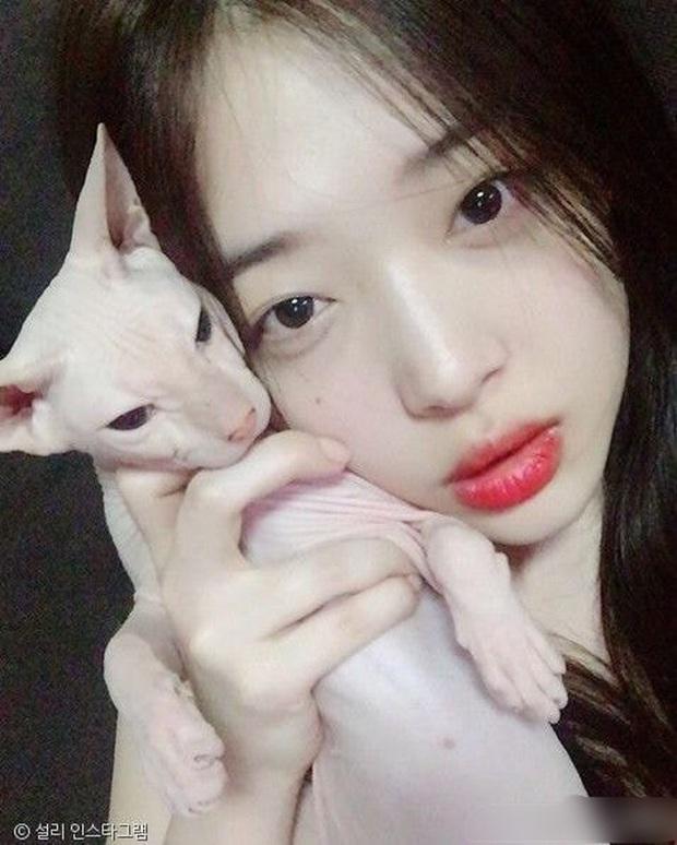 Hình ảnh khiến fan nức nở: Heechul nhận nuôi chú mèo cưng của Sulli sau khi cô qua đời? - Ảnh 5.