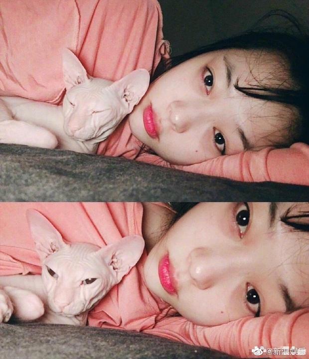 Hình ảnh khiến fan nức nở: Heechul nhận nuôi chú mèo cưng của Sulli sau khi cô qua đời? - Ảnh 4.