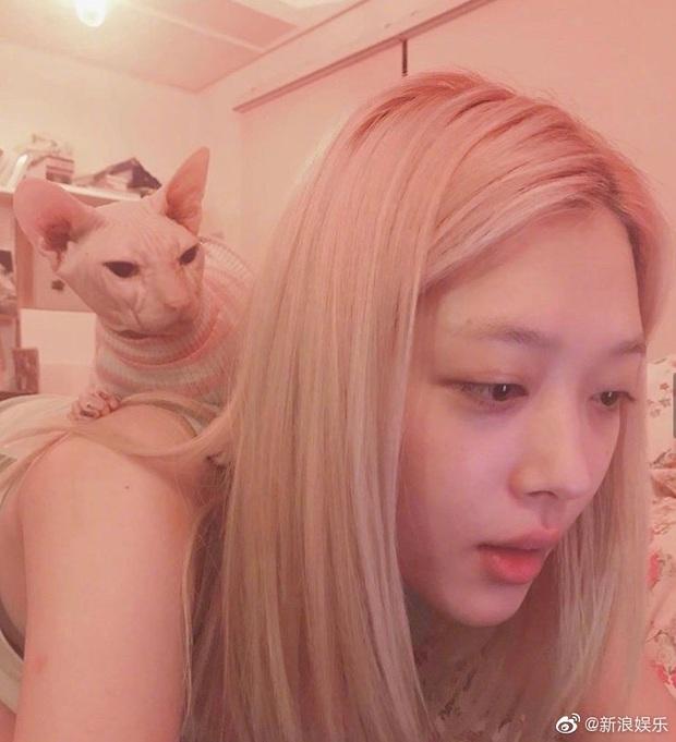 Hình ảnh khiến fan nức nở: Heechul nhận nuôi chú mèo cưng của Sulli sau khi cô qua đời? - Ảnh 6.