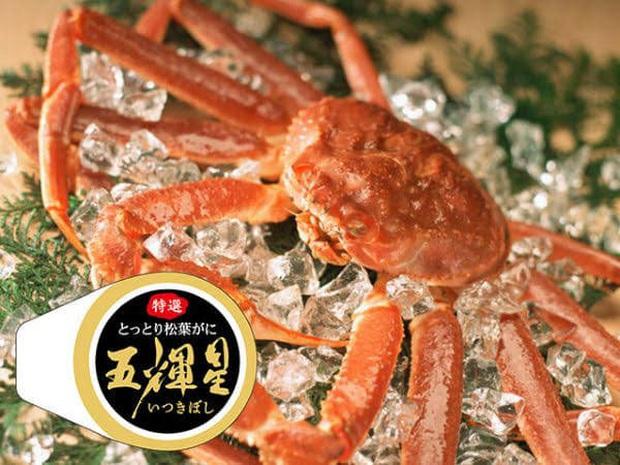 Choáng váng: Cận cảnh con cua biển vừa xác lập kỷ lục đắt nhất thế giới ở Nhật với giá hơn 1 tỷ đồng! - Ảnh 1.