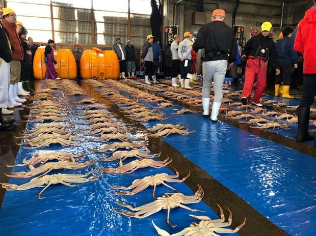 Choáng váng: Cận cảnh con cua biển vừa xác lập kỷ lục đắt nhất thế giới ở Nhật với giá hơn 1 tỷ đồng! - Ảnh 5.
