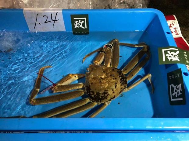 Choáng váng: Cận cảnh con cua biển vừa xác lập kỷ lục đắt nhất thế giới ở Nhật với giá hơn 1 tỷ đồng! - Ảnh 3.