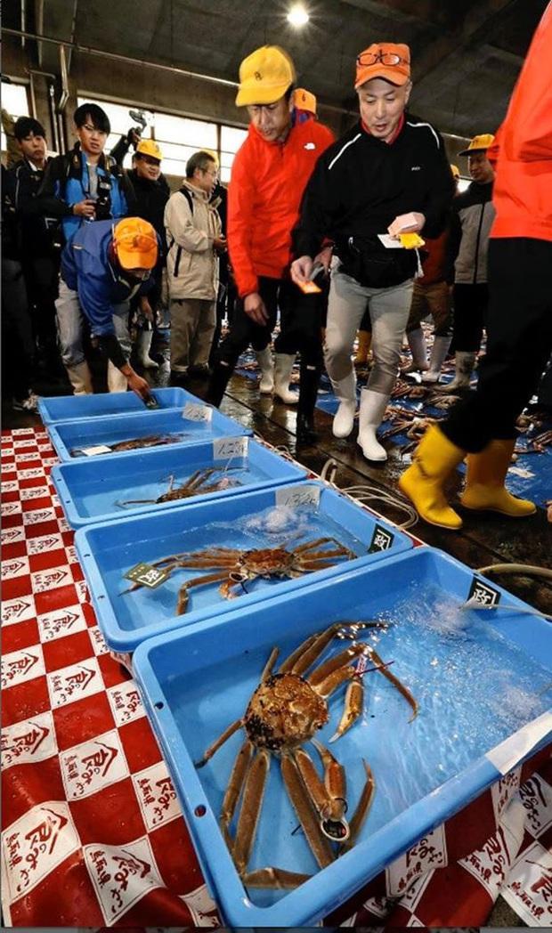 Choáng váng: Cận cảnh con cua biển vừa xác lập kỷ lục đắt nhất thế giới ở Nhật với giá hơn 1 tỷ đồng! - Ảnh 4.