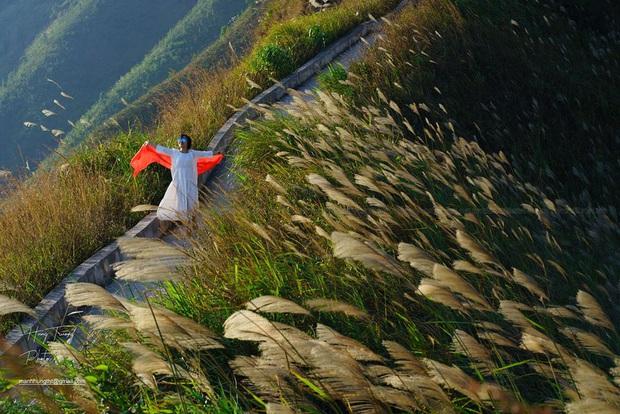"""""""Sống lưng khủng long"""" Bình Liêu đang vào mùa cỏ lau đẹp như một giấc mơ, xem ảnh chỉ biết ôm mộng được đến 1 lần! - Ảnh 16."""