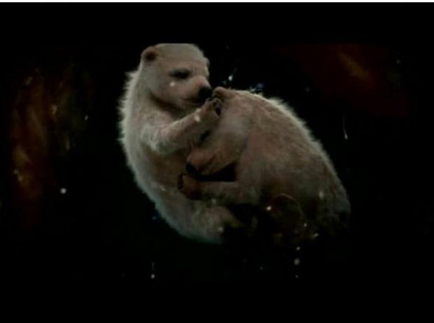 Thế giới động vật: Chùm ảnh hiếm khi các động vật còn trong bụng mẹ - Ảnh 14.