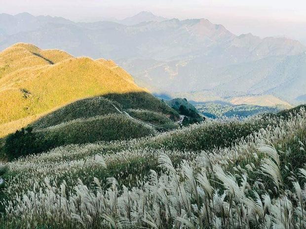 """""""Sống lưng khủng long"""" Bình Liêu đang vào mùa cỏ lau đẹp như một giấc mơ, xem ảnh chỉ biết ôm mộng được đến 1 lần! - Ảnh 4."""