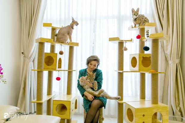 Trang Hà - Cô gái mang những chú mèo trị giá hàng tỷ đồng về Việt Nam và tiết lộ trào lưu nuôi thú cưng mới của giới đại gia và siêu giàu tại Sài Gòn - Ảnh 2.