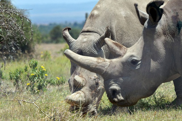 Những sinh vật sắp tuyệt chủng trong thập niên 2020 sẽ ảnh hưởng tới chính sự sinh tồn của loài người - Ảnh 5.