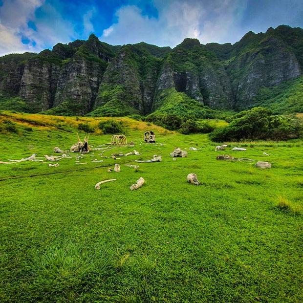 Kualoa Ranch, phim trường cực xịn xò trong bom tấn Jumanji hóa ra lại là điểm đến thu hút cực đông khách du lịch tại Hawaii - Ảnh 4.