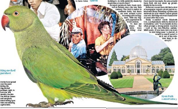 Hàng ngàn con vẹt xanh tự nhiên đổ bộ hàng loạt vào Anh Quốc - bí ẩn suốt hơn 60 năm làm khoa học đau đầu cuối cùng đã có lời giải - Ảnh 2.