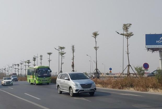 Nhiều cây xanh trên Quốc lộ 18 bất ngờ bị đốt cháy rụi - Ảnh 1.