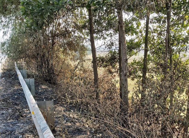 Nhiều cây xanh trên Quốc lộ 18 bất ngờ bị đốt cháy rụi - Ảnh 8.