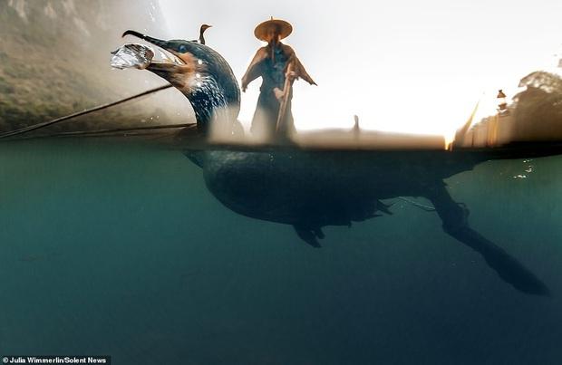 Loạt hình ảnh lão ngư bắt cá bằng chim cốc độc đáo khó rời mắt trong khung cảnh đẹp như tranh thuỷ mặc - Ảnh 8.