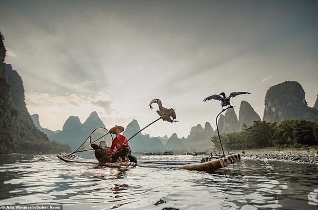 Loạt hình ảnh lão ngư bắt cá bằng chim cốc độc đáo khó rời mắt trong khung cảnh đẹp như tranh thuỷ mặc - Ảnh 4.