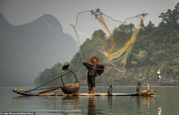 Loạt hình ảnh lão ngư bắt cá bằng chim cốc độc đáo khó rời mắt trong khung cảnh đẹp như tranh thuỷ mặc - Ảnh 6.
