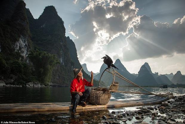 Loạt hình ảnh lão ngư bắt cá bằng chim cốc độc đáo khó rời mắt trong khung cảnh đẹp như tranh thuỷ mặc - Ảnh 10.