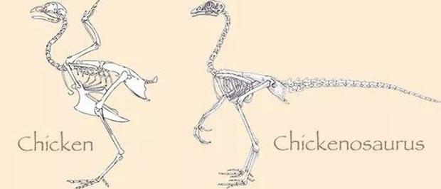 Làm thế nào để hồi sinh một con khủng long cách đây 65 triệu năm? - Ảnh 15.