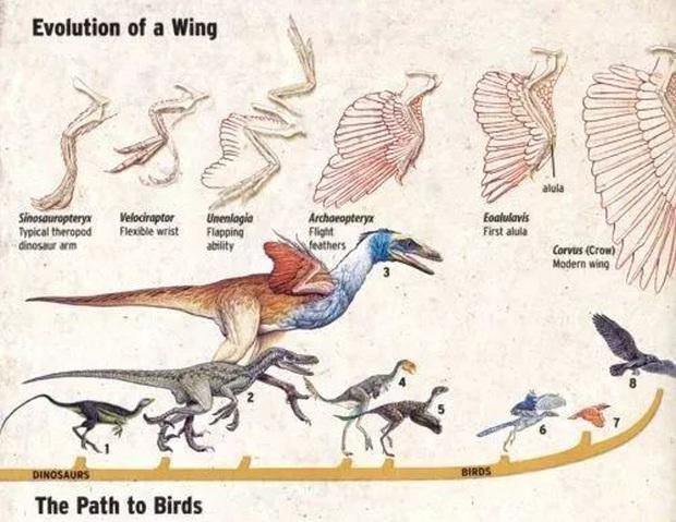 Làm thế nào để hồi sinh một con khủng long cách đây 65 triệu năm? - Ảnh 4.