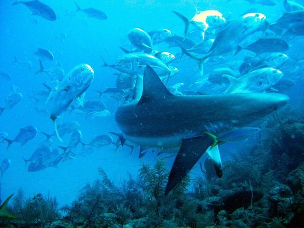 Clip rùng mình: Du khách nhảy dù chao đảo trên miệng hố sâu hun hút giữa biển, bên dưới tiềm ẩn nguy hiểm chết người! - Ảnh 7.