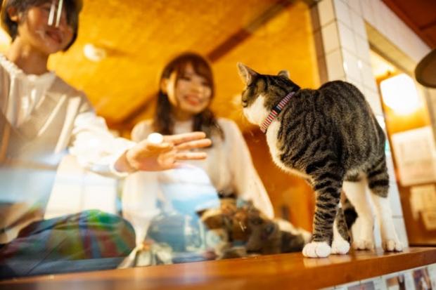 """Khách sạn cho người yêu mèo là đây: Cứ nhìn ra cửa sổ là thấy """"boss"""" bất kể ngày đêm, nắng mưa ra sao - Ảnh 2."""