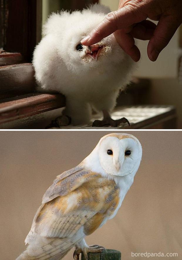 Những loài chim có màn dậy thì thành công nhất mọi thời đại: Lúc bé xâu xấu, lớn lên lại đẹp thấu trời xanh - Ảnh 4.
