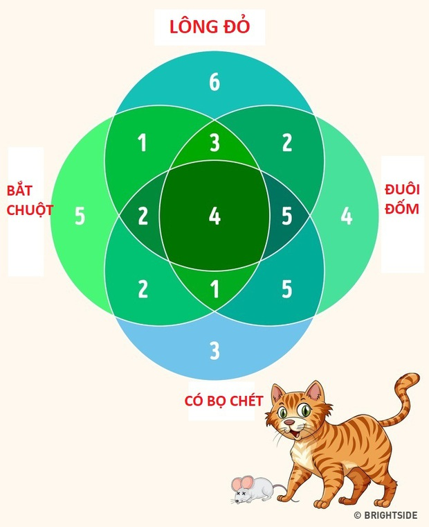 Để biết IQ và óc suy luận của bạn có hơn nhiều người khác không, hãy thử giải 4 câu đố cực hóc búa này! - Ảnh 4.