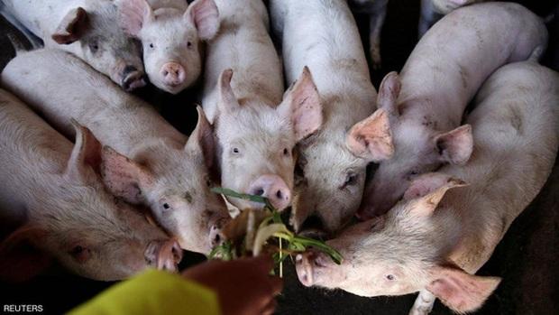 Lợi dụng dịch tả lợn, tội phạm Trung Quốc dùng đủ chiêu trò để trục lợi, từ vứt mầm bệnh vào chuồng lợn đến bán thịt nhiễm bệnh ra thị trường - Ảnh 1.
