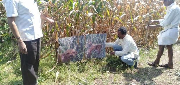 Bực mình lũ khỉ hoang phá phách, bác nông dân cosplay luôn chó nhà mình thành chúa sơn lâm trấn giữ ruộng đồng - Ảnh 1.