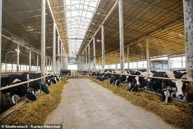 Hơn 30% học sinh tiểu học ở Anh tin rằng trứng gà do bò đẻ ra  - Ảnh 2.