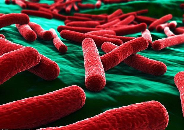Kinh hãi: Vi khuẩn kháng kháng sinh được tìm thấy trong hầu hết những túi đồ trang điểm của phái đẹp - Ảnh 1.