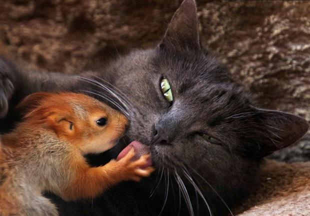 Những hình ảnh về động vật khiến bạn ấn tượng từ cái nhìn đầu tiên - Ảnh 1.