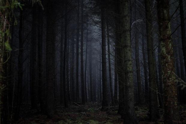 Thuyết Khu rừng đen tối và tại sao chúng ta vẫn chưa tìm thấy người ngoài hành tinh - Ảnh 1.