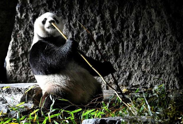 Những hình ảnh về động vật khiến bạn ấn tượng từ cái nhìn đầu tiên - Ảnh 14.