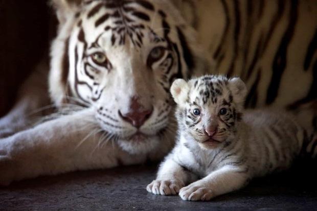 Những hình ảnh về động vật khiến bạn ấn tượng từ cái nhìn đầu tiên - Ảnh 7.