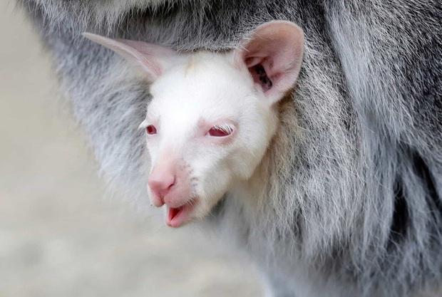 Những hình ảnh về động vật khiến bạn ấn tượng từ cái nhìn đầu tiên - Ảnh 8.
