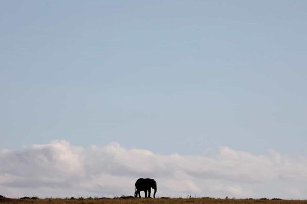 Những hình ảnh về động vật khiến bạn ấn tượng từ cái nhìn đầu tiên - Ảnh 10.