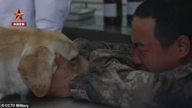 Hình ảnh anh lính khóc nức nở ôm người đồng đội chó sắp qua đời khiến ai xem xong cũng không thể kìm nổi nước mắt - Ảnh 1.