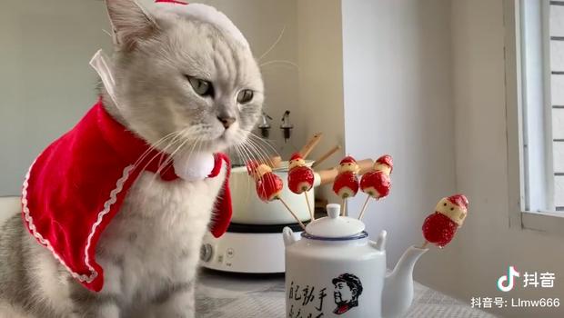 Ấm lòng ngày Giáng sinh: Clip chú mèo quay vlog nấu ăn viral khắp nơi, hội con sen lại sắp lôi các boss ra làm trò cho xem! - Ảnh 14.
