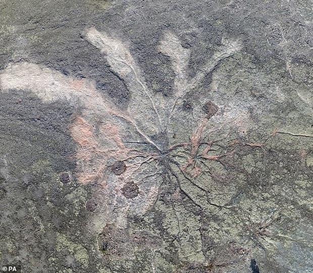 Các nhà khoa học phát hiện khu rừng cổ đại lâu đời nhất trong lịch sử Trái Đất, cách chúng ta 385 triệu năm - Ảnh 3.