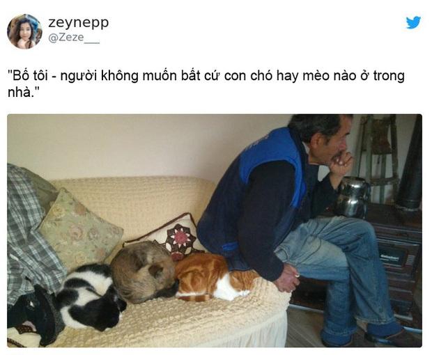 Dân mạng thi nhau chia sẻ những khoảnh khắc hài hước khi lỡ đánh mất bố mẹ vào tay lũ mèo - Ảnh 4.