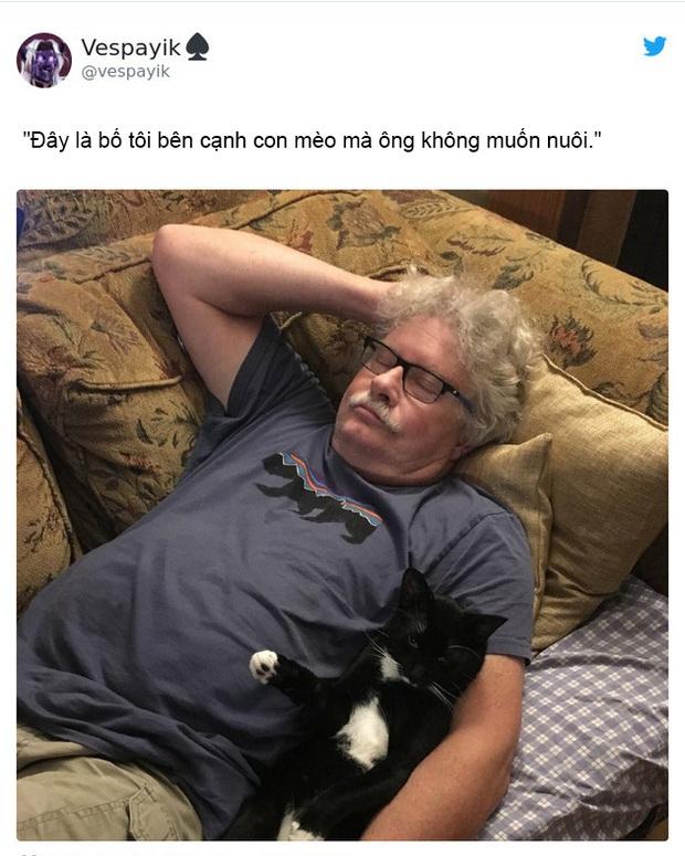 Dân mạng thi nhau chia sẻ những khoảnh khắc hài hước khi lỡ đánh mất bố mẹ vào tay lũ mèo - Ảnh 6.