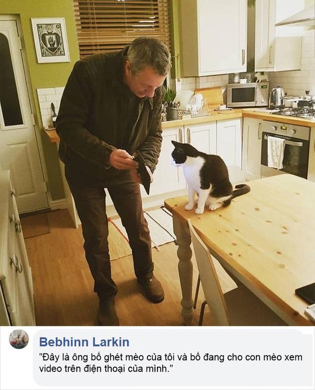 Dân mạng thi nhau chia sẻ những khoảnh khắc hài hước khi lỡ đánh mất bố mẹ vào tay lũ mèo - Ảnh 10.