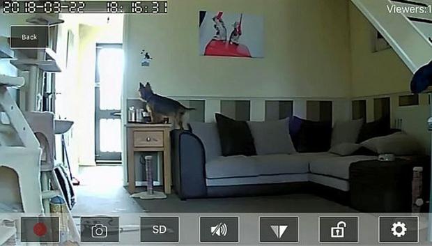 Người phụ nữ bỏ ăn bỏ uống, ám ảnh kinh hoàng vì bị hack camera giám sát trong nhà, nhất cử nhất động bị theo dõi - Ảnh 3.