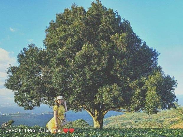 """3 cây cô đơn đình đám đang gây bão mạng dịp cuối năm, hoá ra lại chẳng hề """"cô đơn"""" vì luôn có hội sống ảo kề bên! - Ảnh 15."""