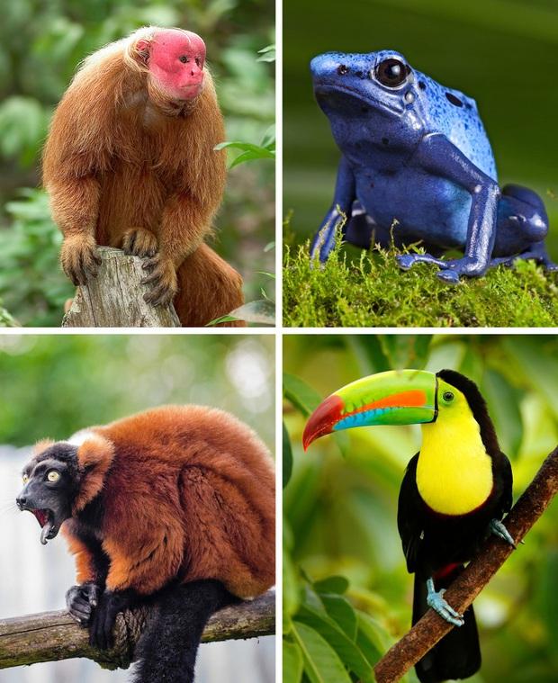 Thế giới sẽ đối mặt với hàng loạt thảm họa nếu rừng Amazon cháy rụi: 90% bệnh tật không có thuốc chữa, 50% loài sinh vật bị tiêu diệt - Ảnh 1.