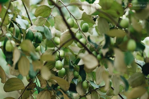 Khám phá vườn táo của trường Đại học rộng nhất Việt Nam, chỉ mất 15k là ăn tẹt ga lại còn được đống ảnh sống ảo - Ảnh 7.
