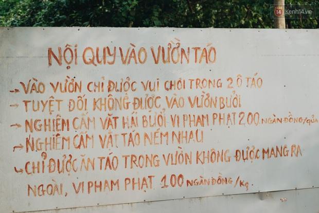 Khám phá vườn táo của trường Đại học rộng nhất Việt Nam, chỉ mất 15k là ăn tẹt ga lại còn được đống ảnh sống ảo - Ảnh 3.
